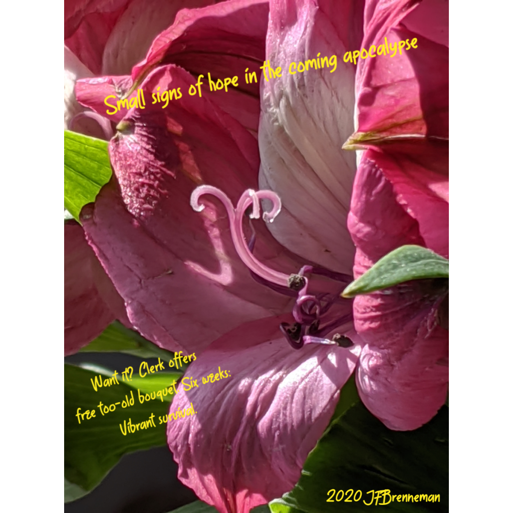 close-up of dark pink and white flower and green leaves; text overlaid on image.