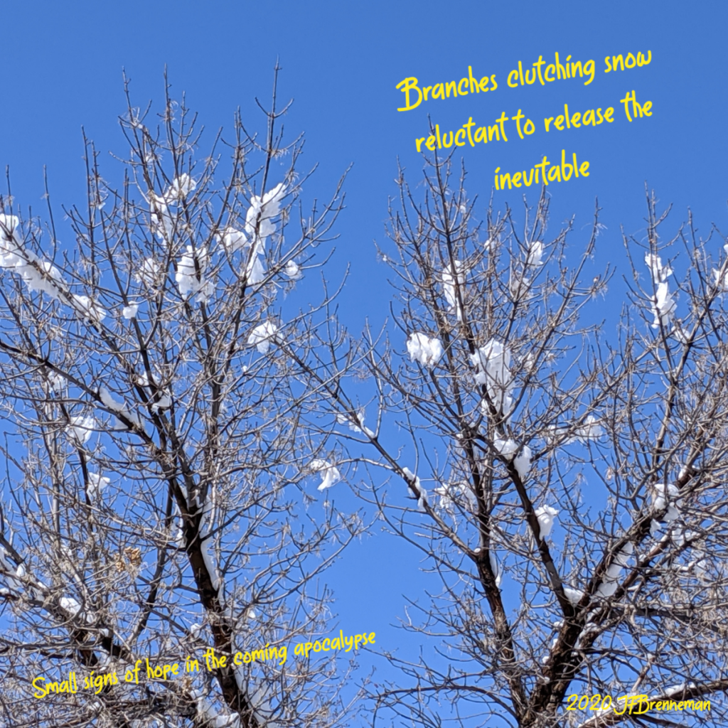 bare cottonwood branches with tufts of snow caught in the upper reaches; clear blue sky behind and above; text overlaid on image