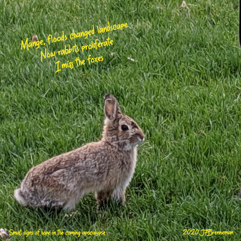 wild rabbit in green grass lawn; text overlaid on image