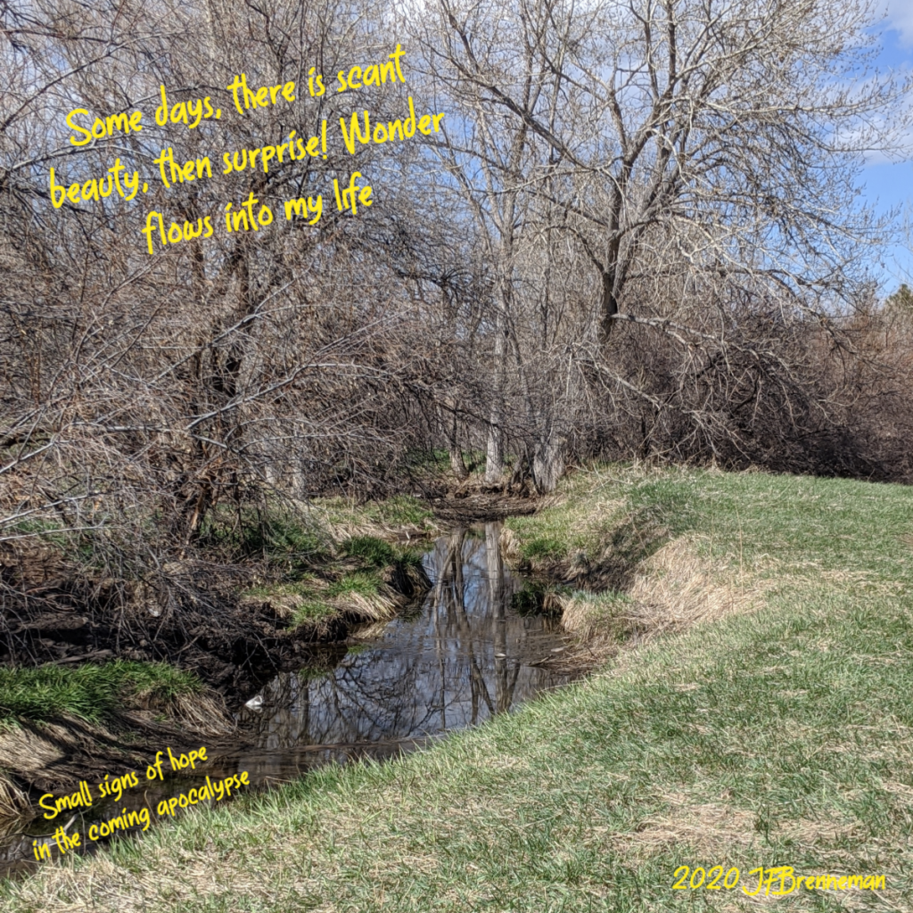 cottonwoods reflected in small stream on a lovely spring day; text overlaid on image