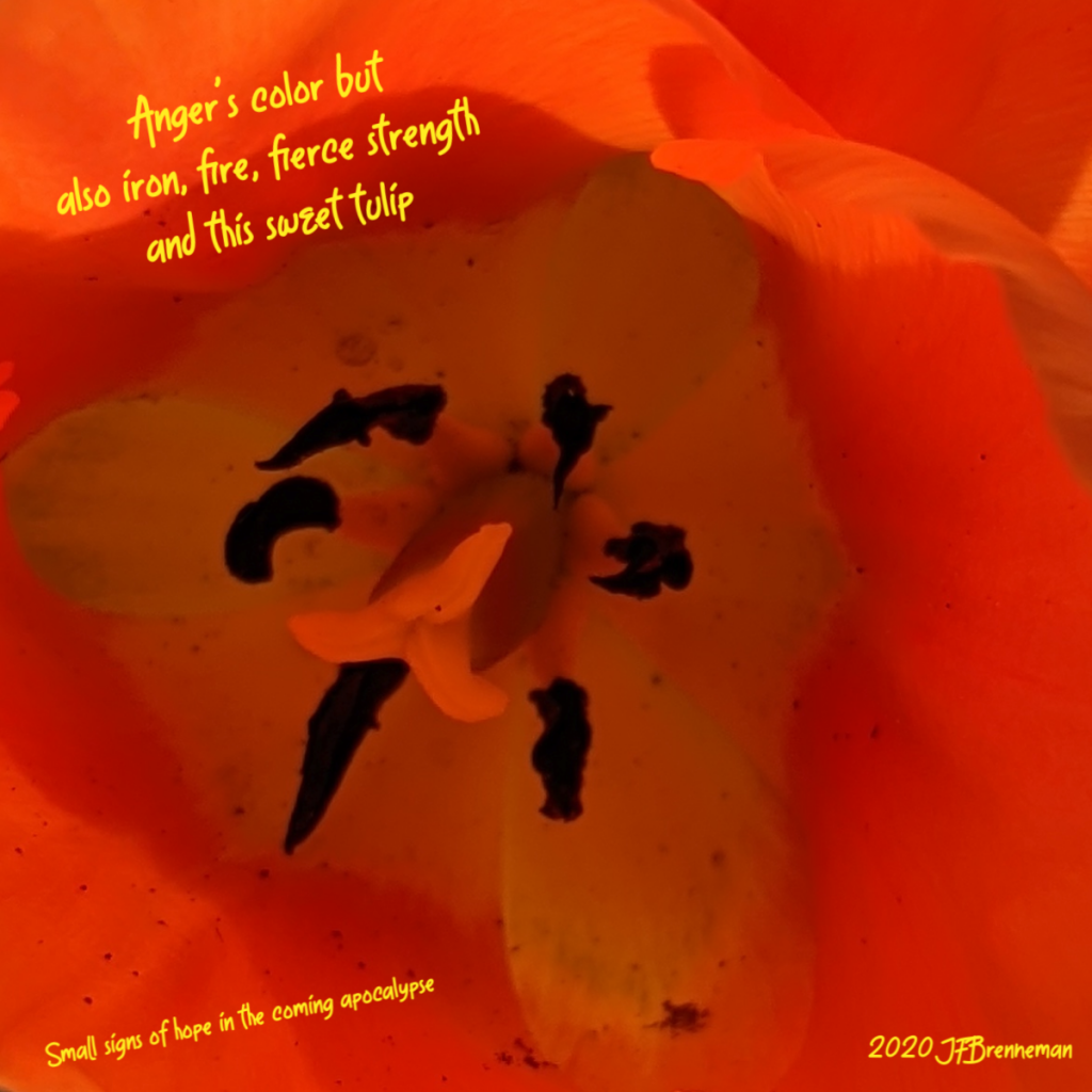 Close up on center of orange tulip bloom; text overlaid on image