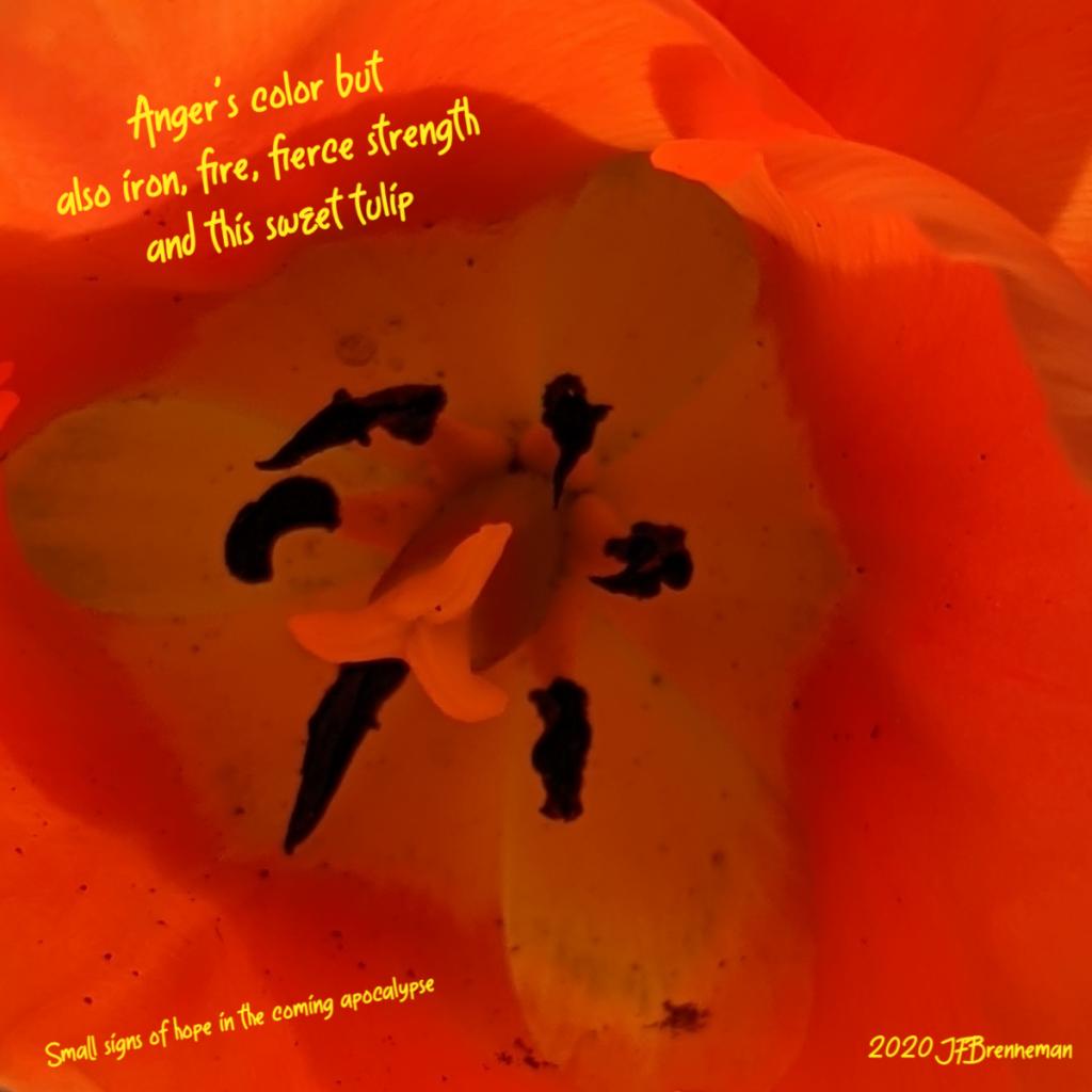 Close up on center of orange tulip bloom; text overlaid on image