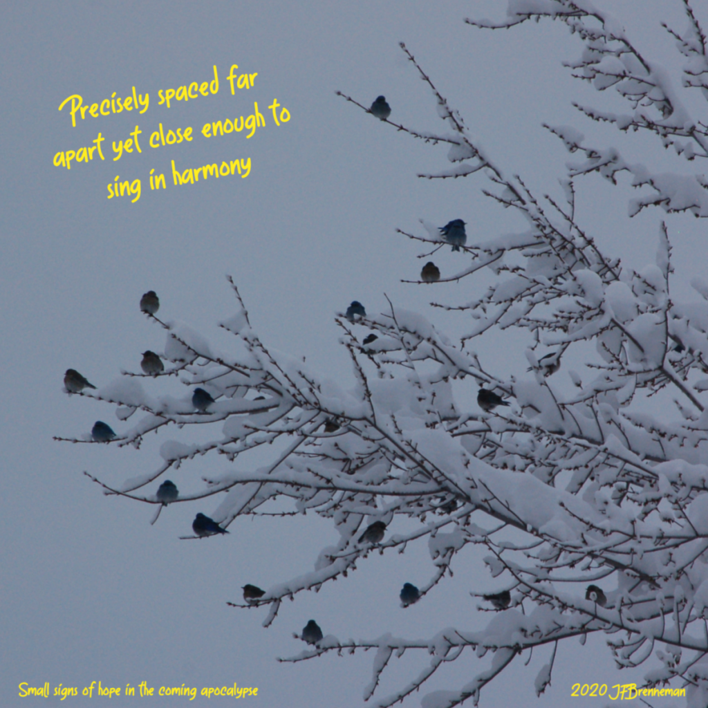 starlings perched on snow-covered tree limbs, gray sky background; text overlaid on image