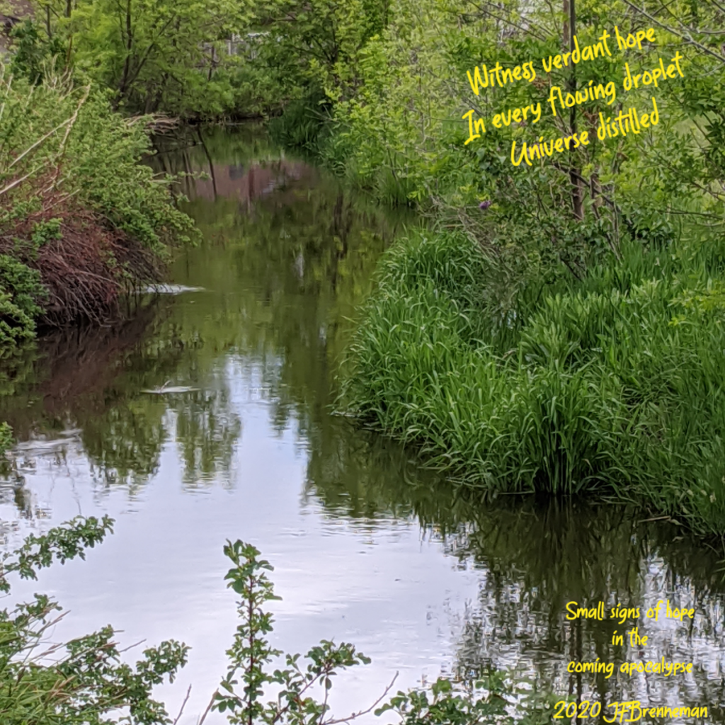 calm stream bordered by lush green grasses, saplings, and shrubs; text overlaid on image