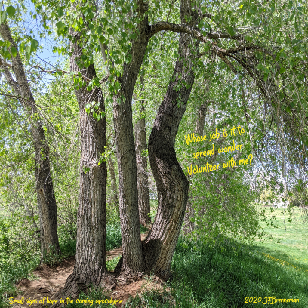 dirt path through a stand of cottonwood trees, one with curved trunk that makes it look like it's dancing; text overlaid on image