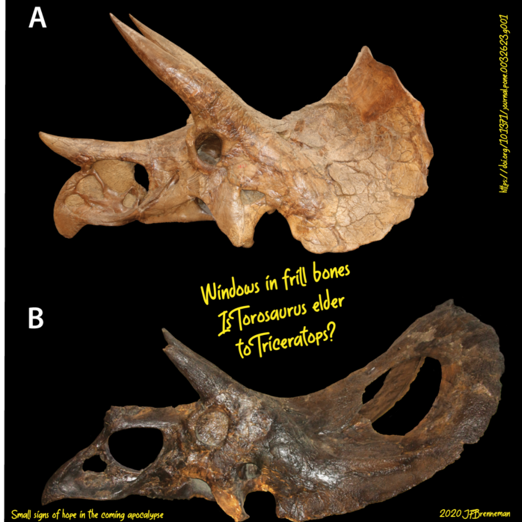 Comparison of Triceratops and Torosaurus skulls; text overlaid on image