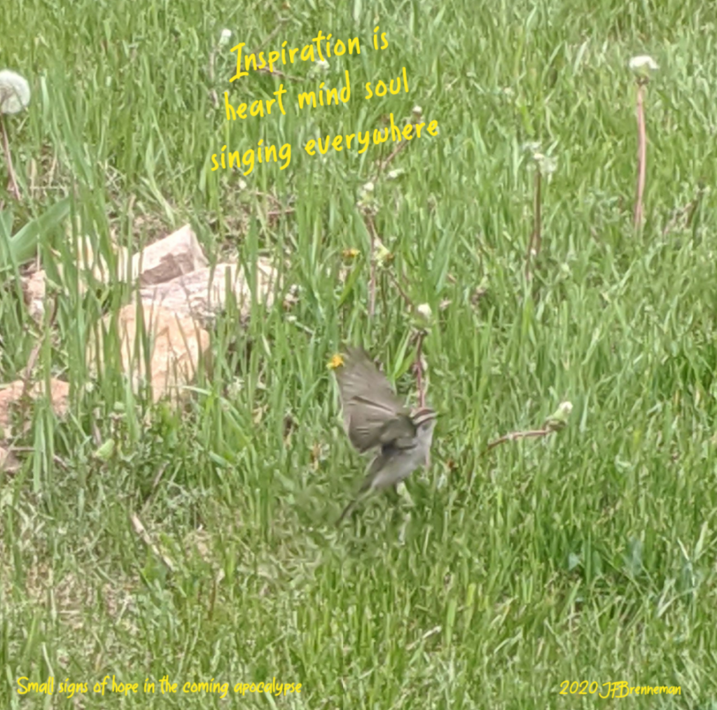 bird (a flicker) with wings spread, in deep grass; text overlaid on image