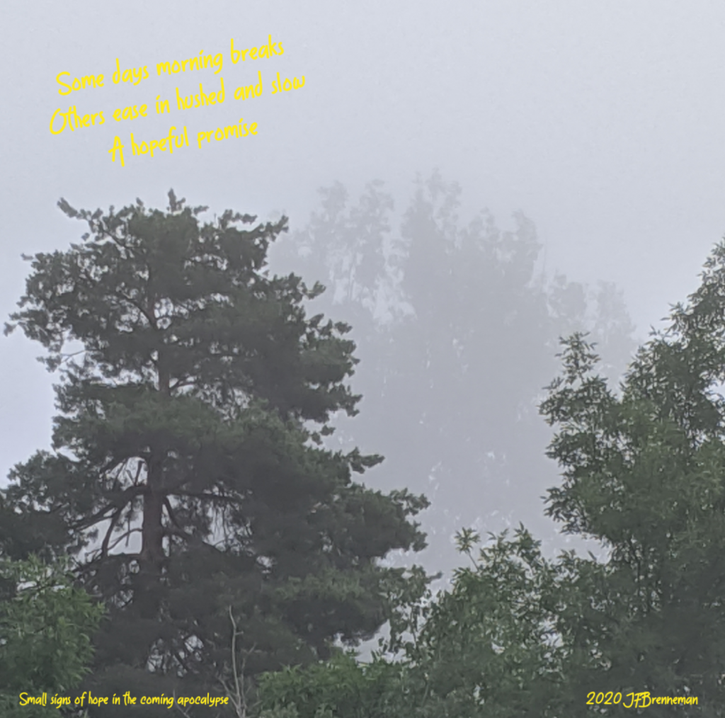 mist shrouded trees in early morning; text overlaid on image