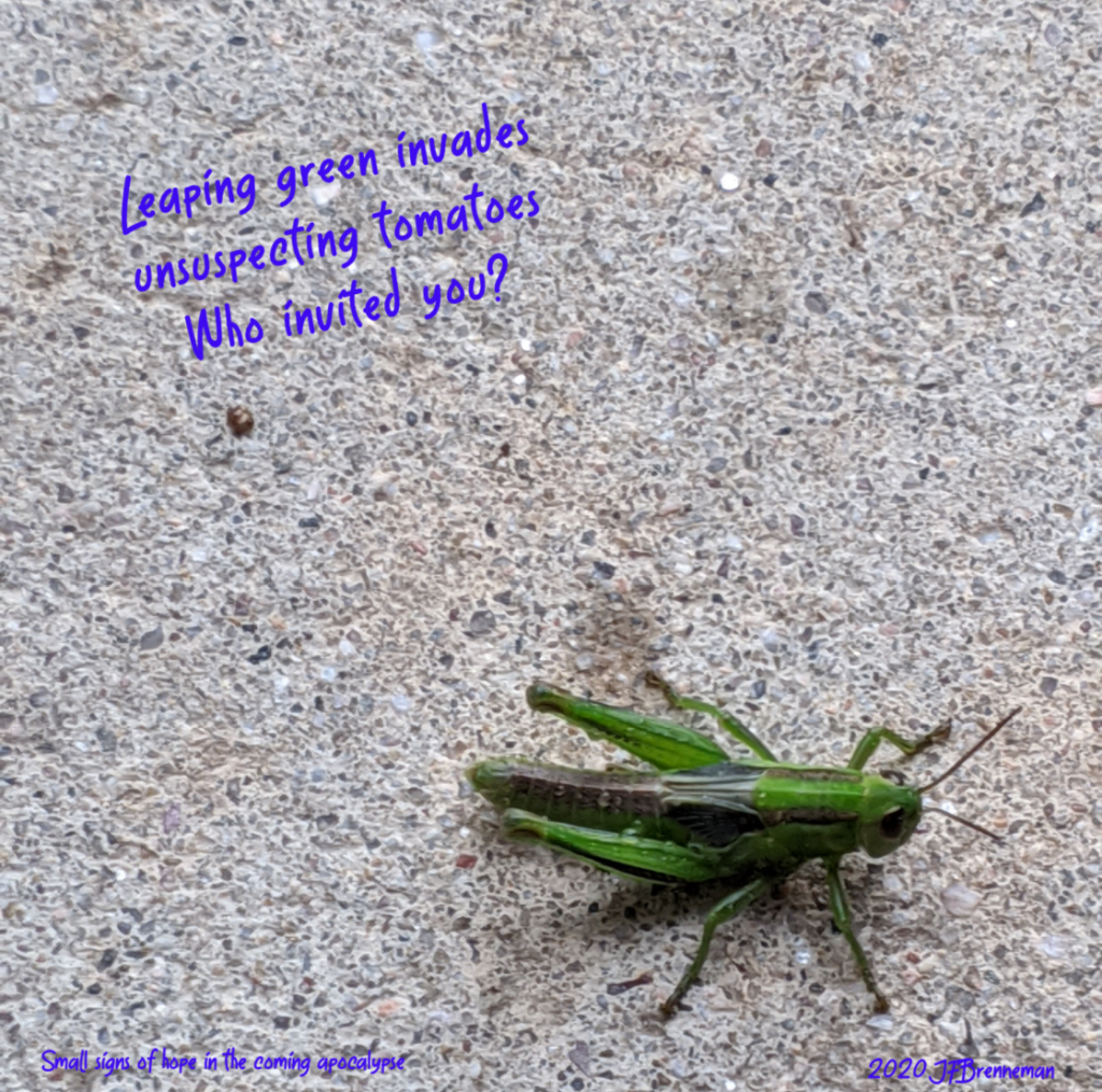 bright green grasshopper; text overlaid on image
