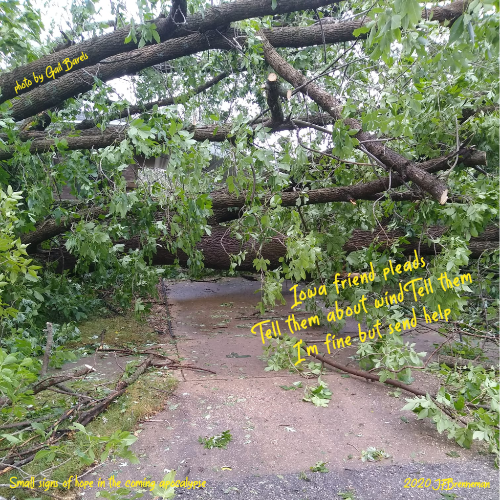 Huge trees blown down by Iowa derecho wind storm, blocking driveway; text overlaid on image