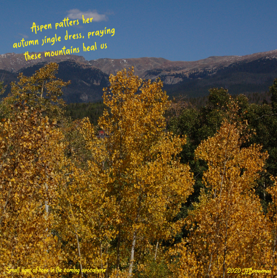 View of Colorado golden-hued aspen stand and mountains beyond on a clear autumn day; text overlaid on image