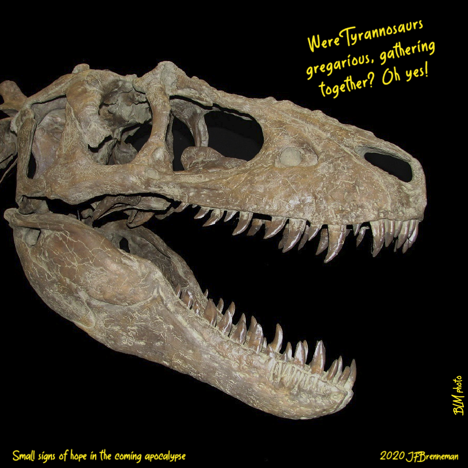 "Tyrannosaur skull from the ""Rainbows and Unicorns Quarry"" excavation site, GSENM, Utah; text overlaid on image"