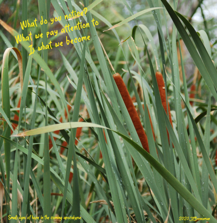Dense cluster of cattails, water drops clinging to leaves; text overlaid on image