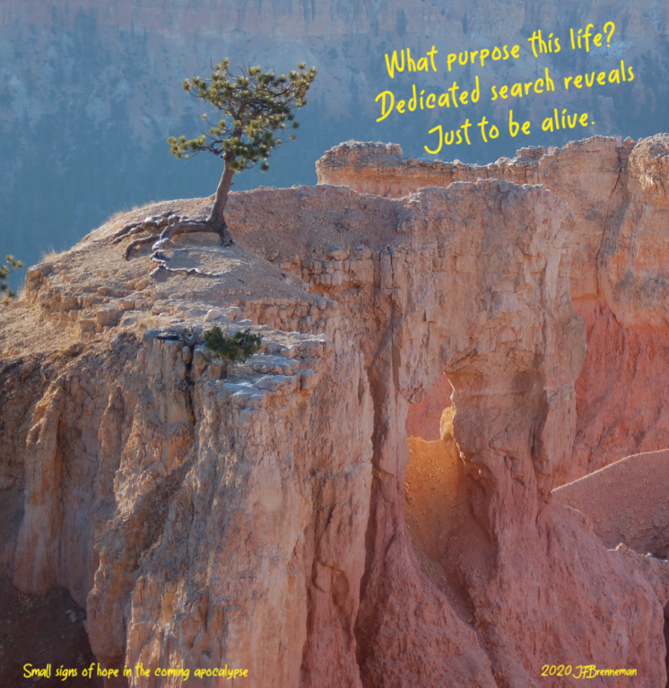Bristlecone pine overlooking rocky ledge and hoodoos in Bryce Canyon National Park; text overlaid on image
