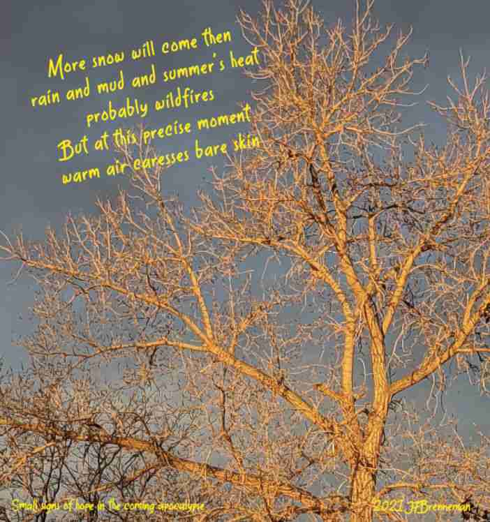 gold-hued dawn light on winter-bare tree branches; text overlaid on image