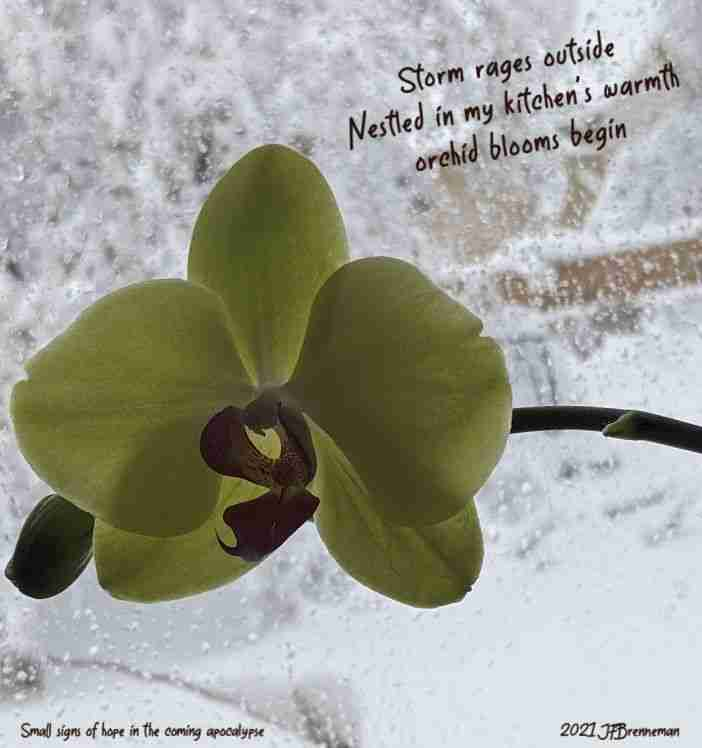 Orchid blossom against snow-splattered window overlooking snow-covered lawn and tree; text overlaid on image
