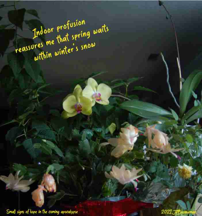Profusion of blooming houseplants including orchid, Christmas cactus, and miniature rose; text overlaid on image
