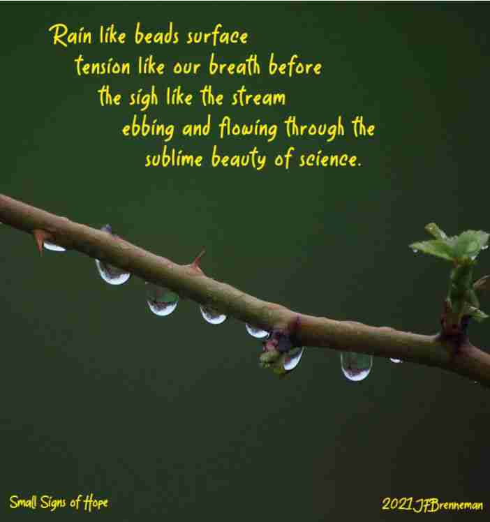 Rain droplets adhering (thanks to surface tension) to the lower edge of a curved rose bush branch; text overlaid on image